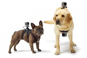 GoPro Inc Fetch Dog Mount